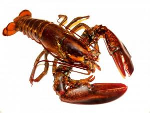 lobster-164479_1280
